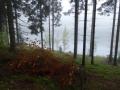 Weinsberger Wald