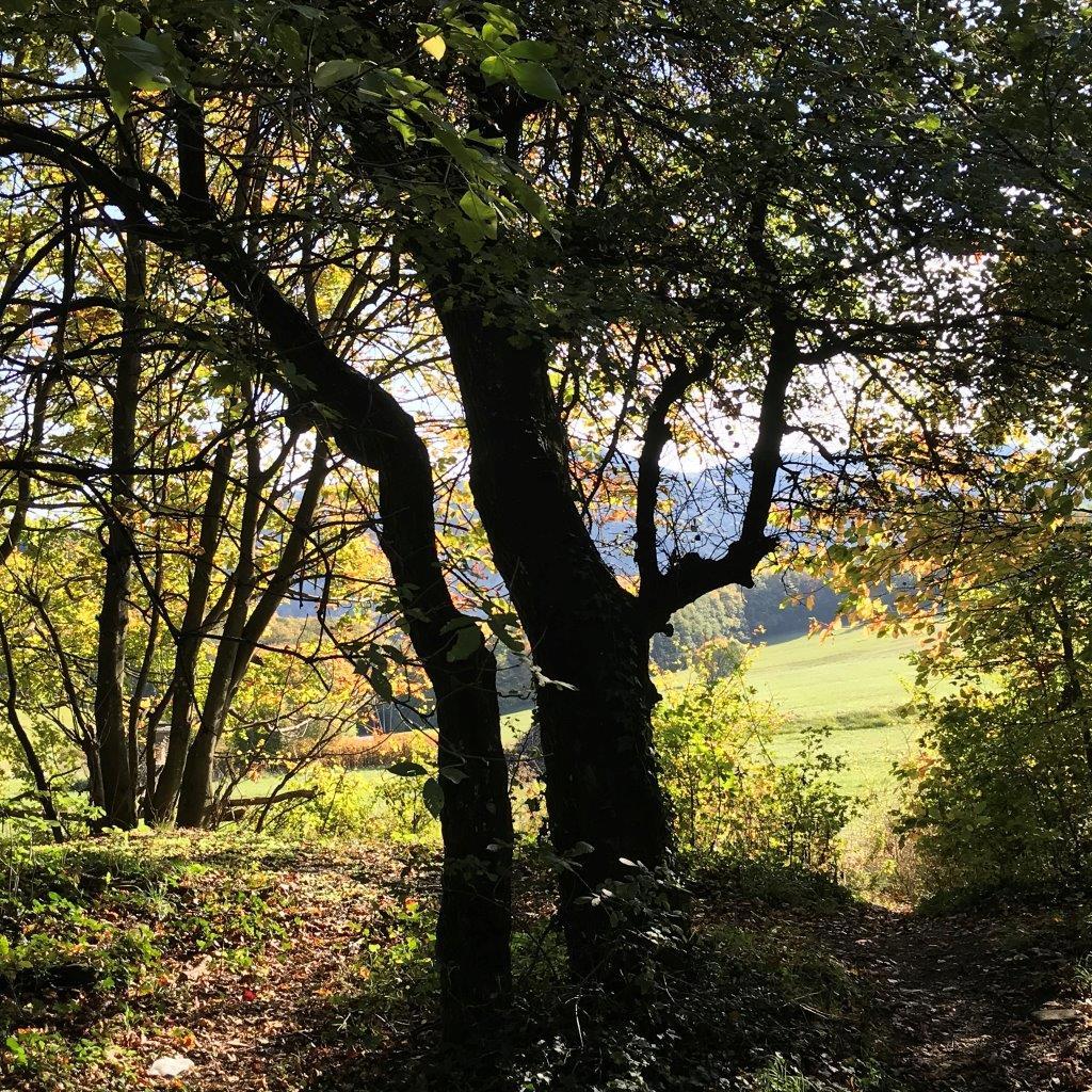 Wandern Wienerwald