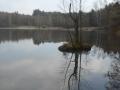 Teich bei Litschau